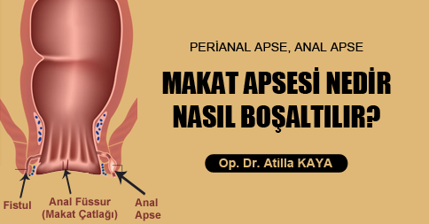 Anal Apse